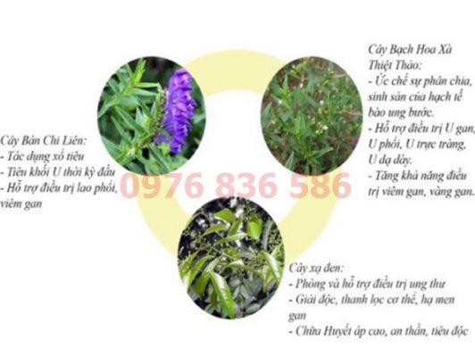 Kết hợp cây xạ đen bán chi liên bạch hoa xà