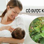 Uống cây xạ đen có lợi sữa cho chị em đang cho con bú hay không?