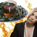 Cây an xoa có giúp thanh nhiệt giải độc cơ thể không?