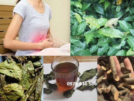 cây xạ đen hỗ trợ điều trị các bệnh về tiêu hóa, gan mật, dạ dày