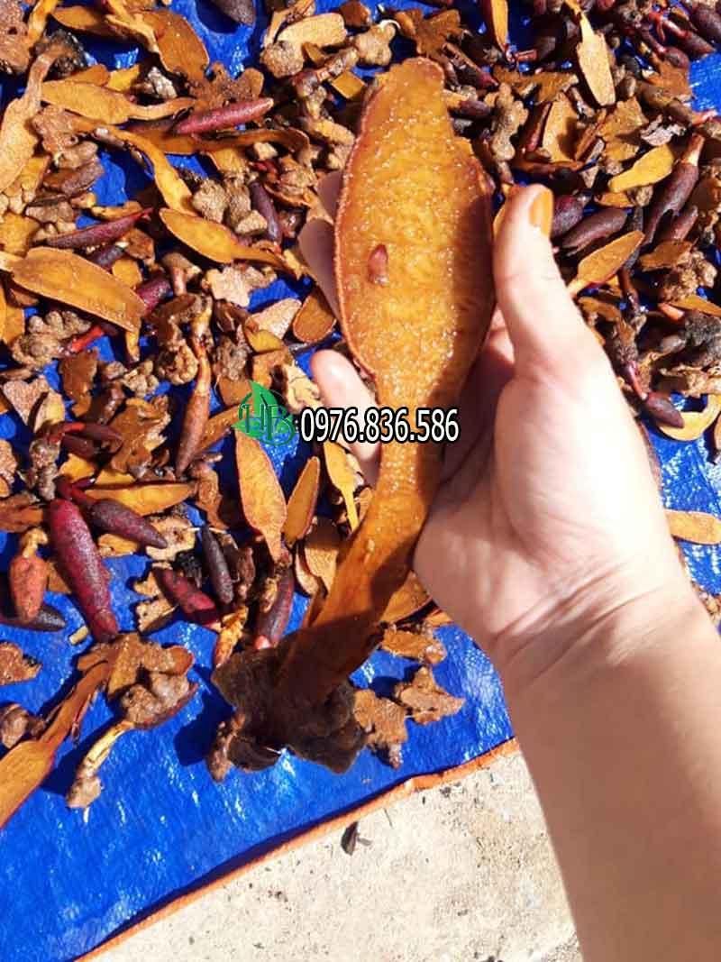 Nấm ngọc cẩu 5