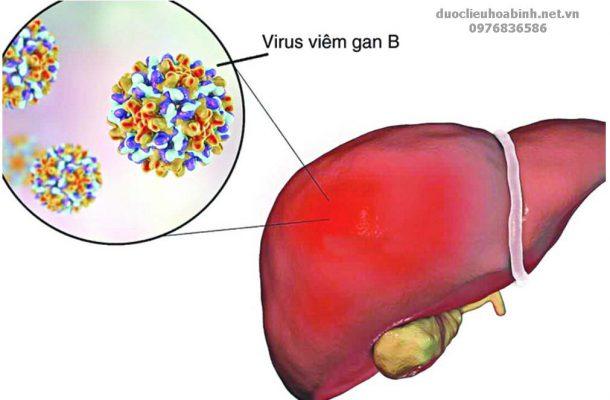 Cây an xoa hỗ trợ điều trị viêm gan B