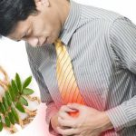 Cây mật nhân chữa bệnh đau dạ dày