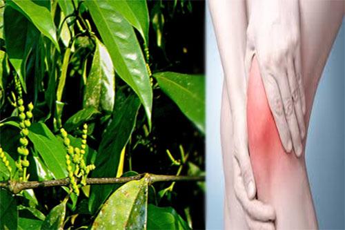 Dây gắm hỗ trợ điều trị đau nhức gân xương