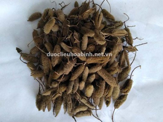Mua bán hạt giống cây an xoa chất lượng
