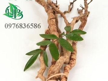 Rễ cây mật nhân trị bệnh gì
