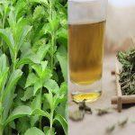 Uống cây cỏ ngọt giảm cân