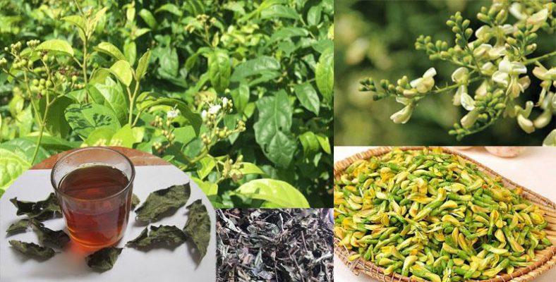 Cây xạ đen uống chung với hoa hòe được không?