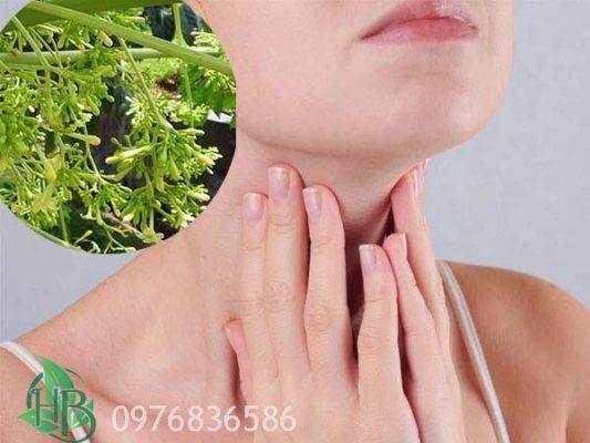 Hoa đu đủ đực hỗ trợ điều trị bệnh bướu cổ