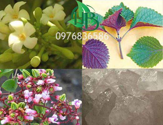 Bài thuốc chữa ho từ hoa đu đủ đực