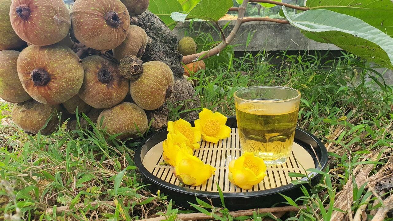 Tác dụng và cách sử dụng trà hoa vàng Tam Đảo