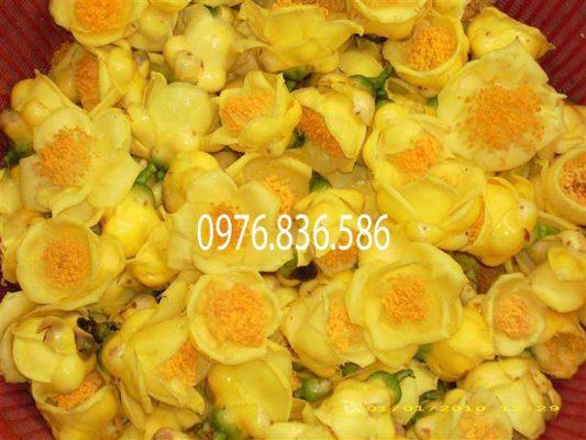 Cách sử dụng lá trà hoa vàng sát khuẩn vết thương