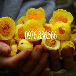 Đặc điểm cây trà hoa vàng
