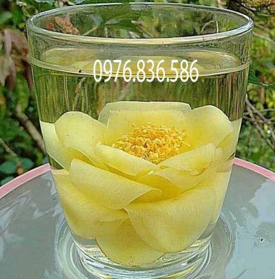 Cách sử dụng trà hoa vàng đơn giản hiệu quả