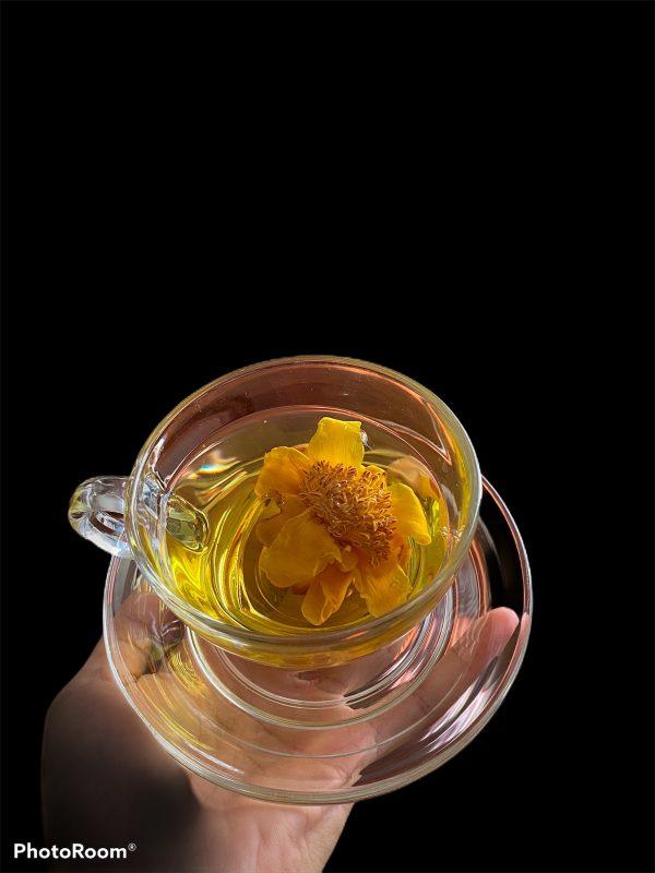 Cách nhận biết trà hoa vàng Tam Đảo