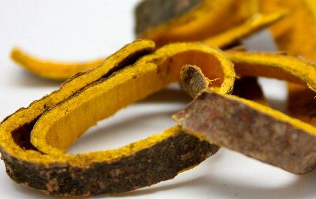 Vỏ cây núc nác có nhiều tác dụng chữa bệnh