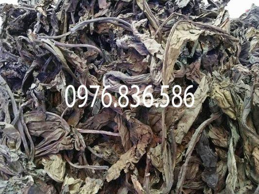 Do lượng lá khôi tía hiện nay ít và hiếm