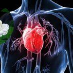 Uống trà Trà hoa nhài bảo vệ tim mạch khỏe mạnh