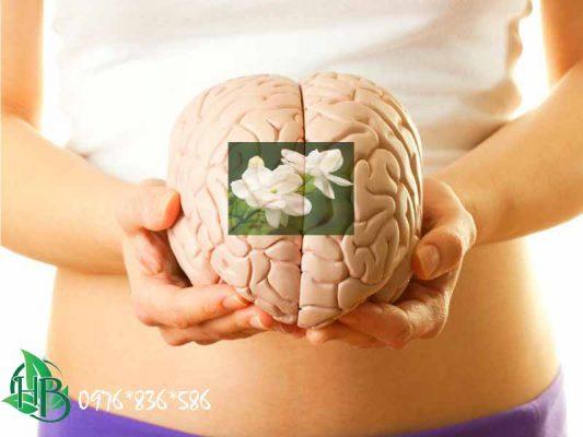 Trà hoa nhài tăng cường chức năng não bộ
