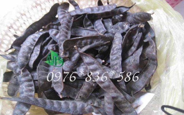 Hướng dẫn dùng bồ kết chữa bệnh trĩ. Bồ kết là vị thuốc được dùng để điều trị nhiều chứng bệnh khác nhau như quai bị, sưng vú, rụng tóc…