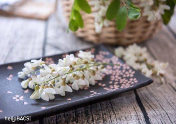 Trà hoa hòe trị bệnh trĩ hiệu quả