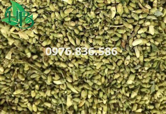 Dược liệu Hòa Bình chuyên cung cấp hoa hòe khô chất lượng tốt nhất