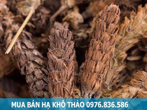Mua bán cây hạ khô thảo