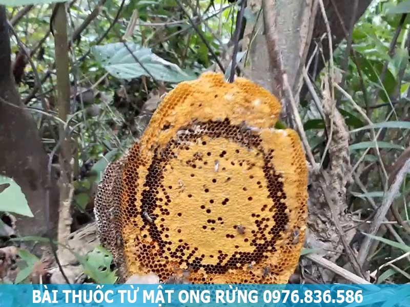 Bài thuốc từ Mật ong rừng nguyên chất Hòa Bình