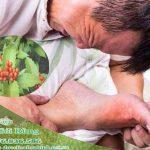 Hỗ trợ điều trị gout hiệu quả bằng thảo dược cây sói rừng