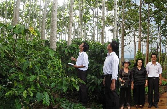 Chi tiết cụ thể và cây giống gỗ Hông