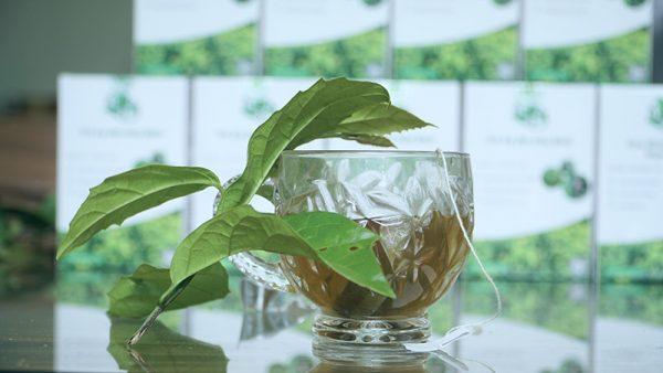 Cách dùng trà xạ đen túi lọc