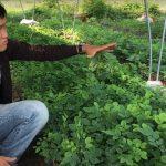 Kỹ thuật chăm sóc cây Trắc đỏ mang lại hiệu quả kinh tế cao