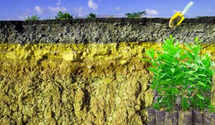 Thổ nhưỡng thích hợp trồng cây giống đàn hương