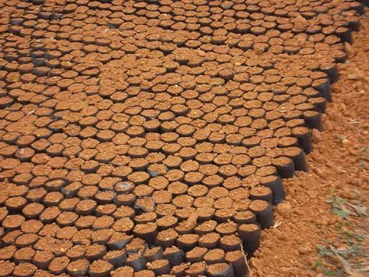 Áp đất tạo má luống