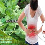 Cách sử dụng cây dạ cẩm chữa bệnh dạ dày