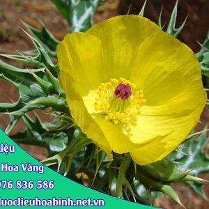 Hình ảnh cây cà dại hoa vàng
