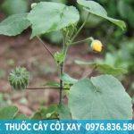 Địa chỉ mua cây cối xay tại TP.HCM