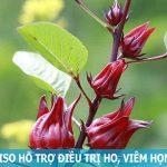 Atiso đỏ hỗ trợ điều trị ho và đau rát cổ họng