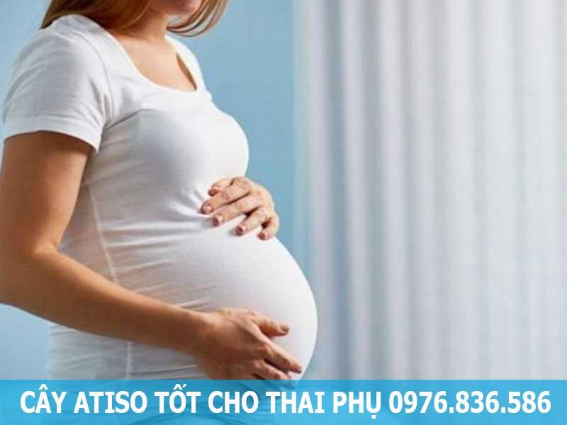 cây atiso tốt cho thai phụ