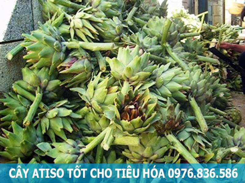 cây atiso tốt cho tiêu hóa